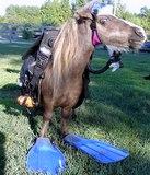 scuba_diving_horse.jpg